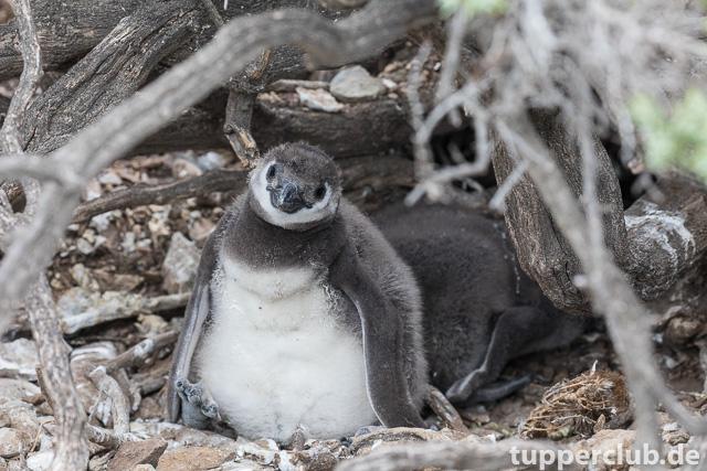 pinguinkuecken